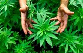 Особенности лечения зависимости от марихуаны